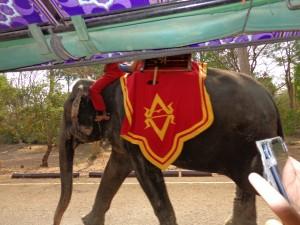 Hey Mister Elephant !