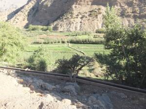 Paysage arboré dans un village du Haut Atlas