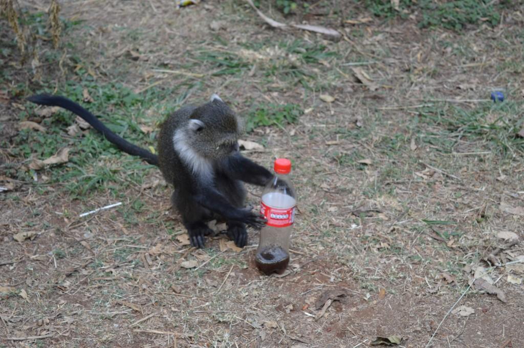 Globalong au parc à singe excursions