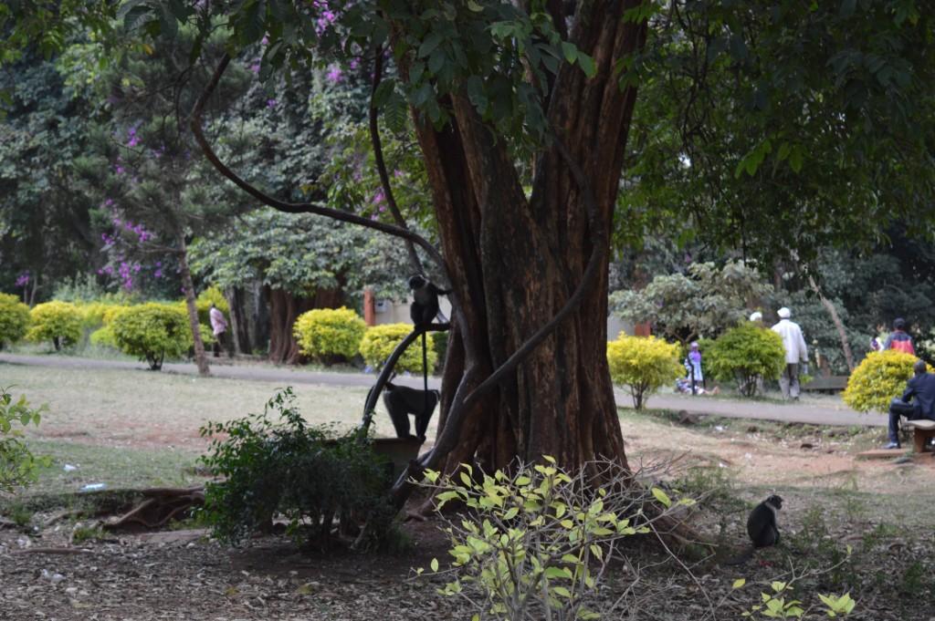 Bénévolat et excursions avec Globalong au Kenya