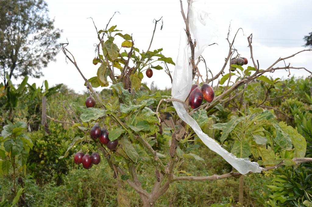 Afrique légumes et fruits Globalong humanitaire