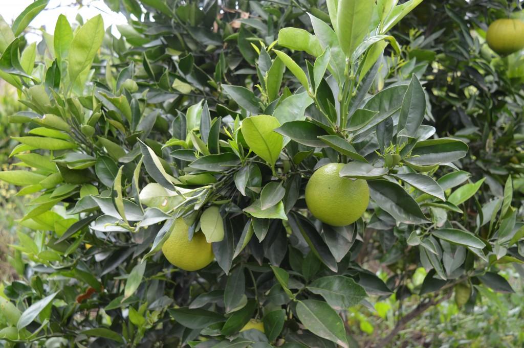 Jardin et arbres fruitiers Globalong
