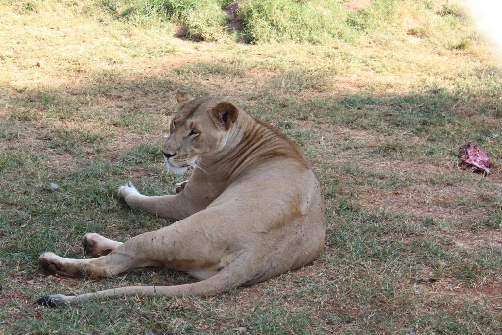Mission animalière au Kenya avec Globalong