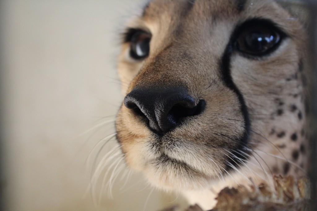 Bénévoles animalier qualifié en soins vétérinaires Globalong