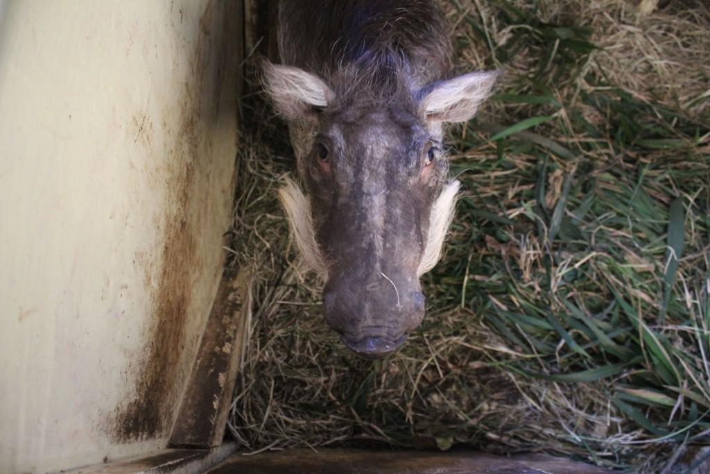 Nurserie Orphelinat animalier Globalong