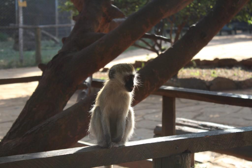 Orphelinat animalier Kenya Nairobie Globalong